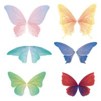 Collection of butterfly wings
