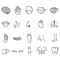 Collection of human body parts