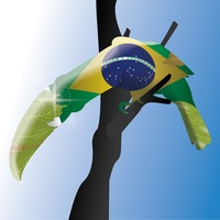 Double exposure of macaw with brazil flag