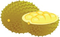 Jackfruit over a white background