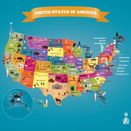 Birds : Usa map with states