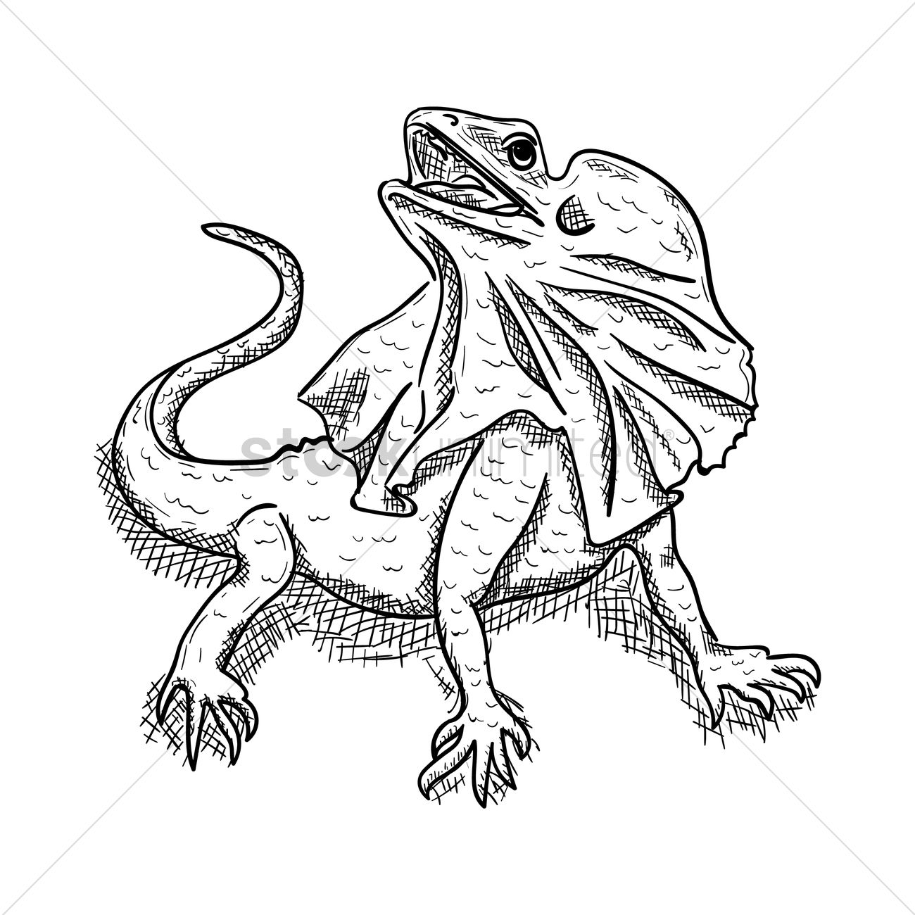 Line Drawings Of Australian Animals : Frilled lizard vector image stockunlimited