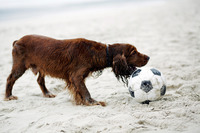 Dog playing with football on the beach
