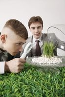 Man looking at grass seedling under magnifying glass