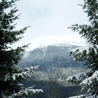 Snow-covered mountain and trees