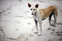 Stray dog on the beach