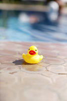 Toy duck beside a swimming pool