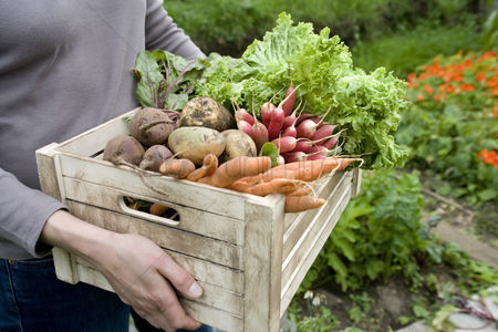 Food : Woman carrying crate of vegetables mid section