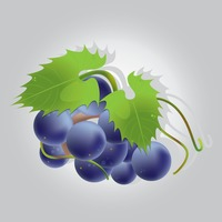 Popular : Bunch of grapes