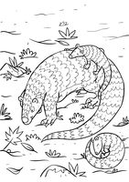 Pangolin with pangopups