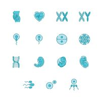 Set of human reproductive icons