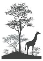 Silhouette of giraffe in its natural habitat