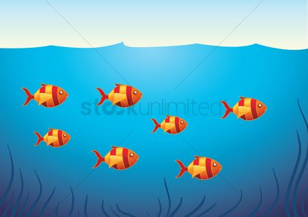 Ocean : A school of fish