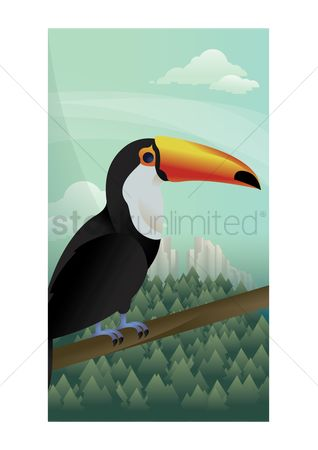 Toco toucan : Abstract toco toucan on forest background