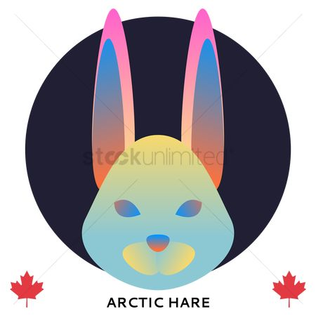 Hare : Arctic hare