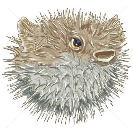 Marine life : Blowfish