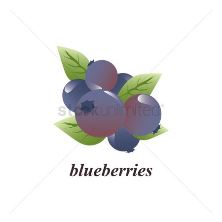 Blueberry : Blueberries
