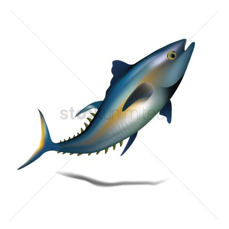 Marine life : Bluefin tuna fish