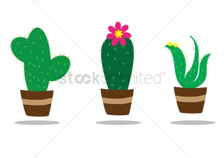 Flower pot : Cactus plant in pot