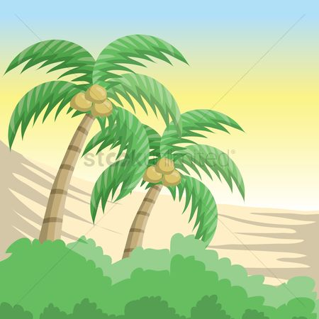 Grass background : Coconut trees background