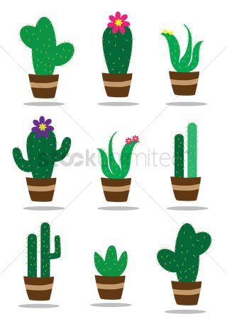 Flower pot : Collection of cactus plants
