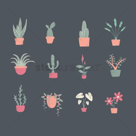Greens : Collection of decorative plants