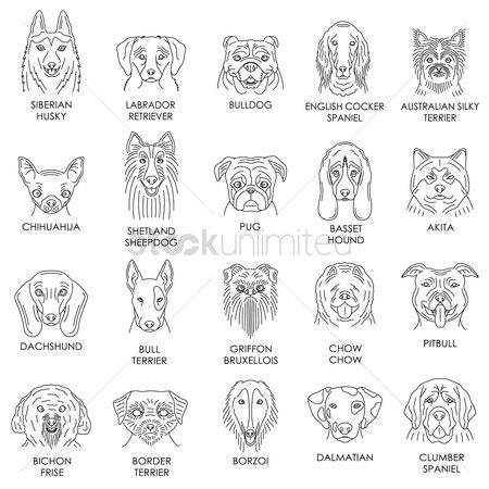 Bull : Collection of dog breeds