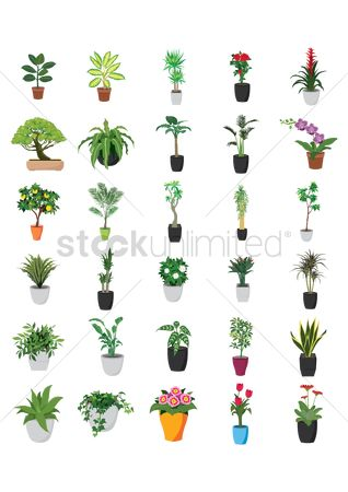 Decors : Collection of potted plants