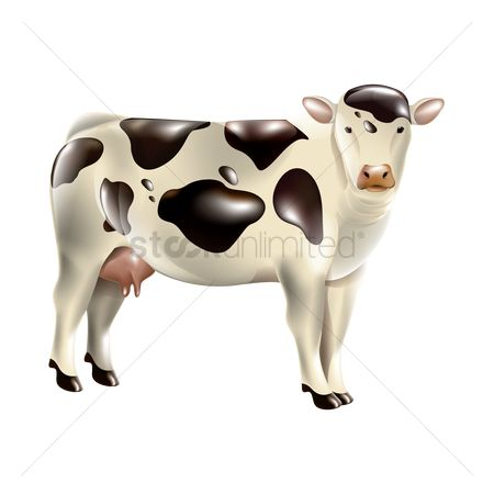 Dairy : Cow