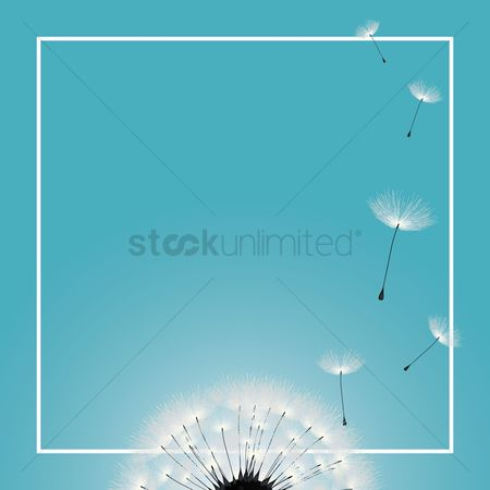 Floral : Dandelion background