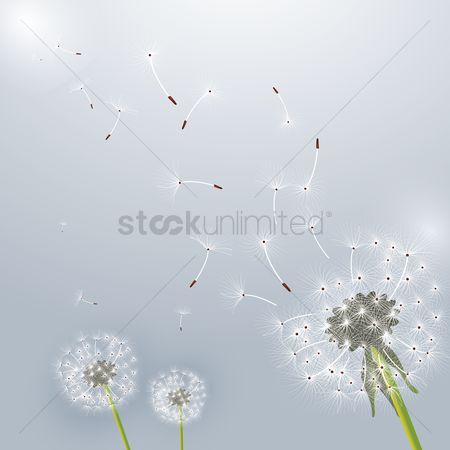 Budding : Dandelion flower design