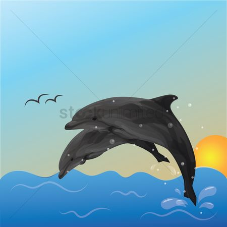 Dolphins : Dolphins in the ocean
