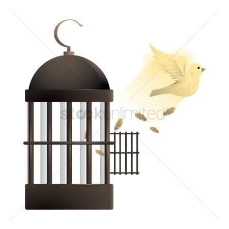 Freedom : Dove flying out of cage
