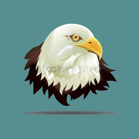 Hawks : Eagle face