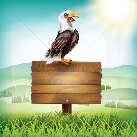 Hawks : Eagle with a wooden placard