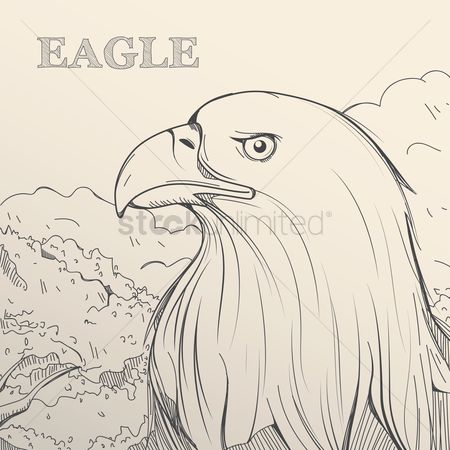 Hand drawn : Eagle