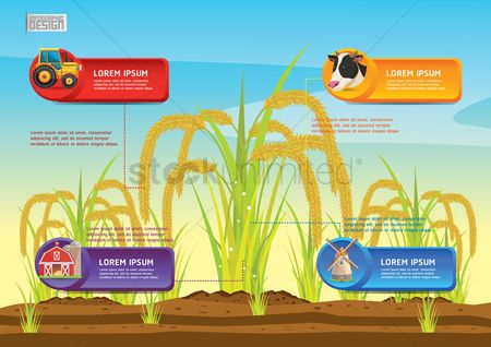 Cow : Farm and agriculture infographic