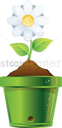 Flower pot : Flower from a pot