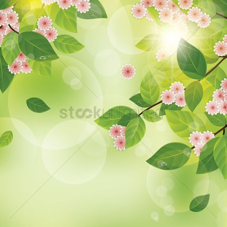 Sunray : Flowers background