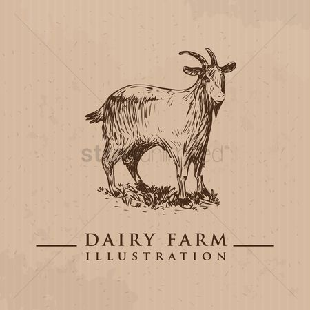 Dairy : Goat