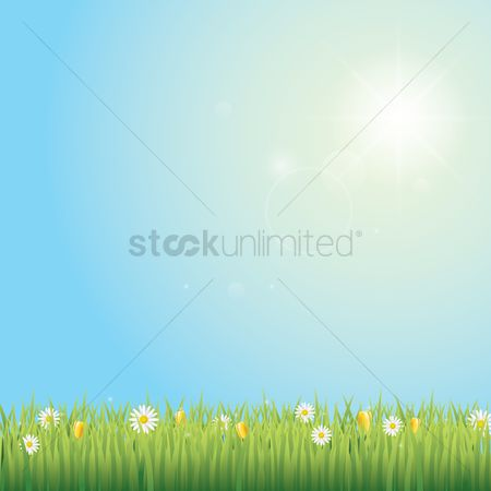 Spring : Grass and flowers background