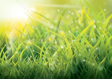 Sunray : Grass background