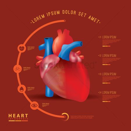 Biology : Heart infographic