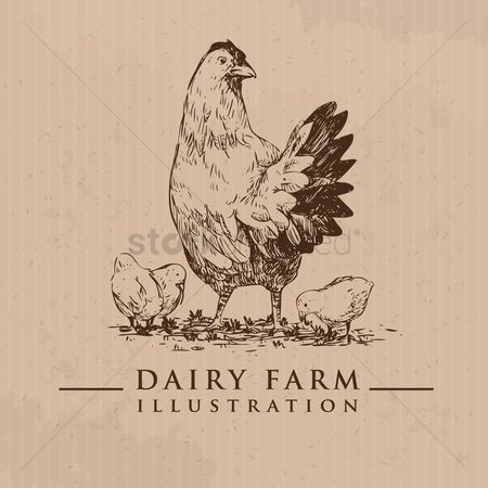 Dairy : Hen and chicks