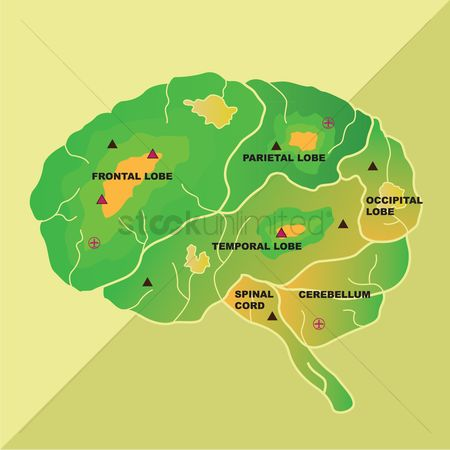Medical : Human brain sections