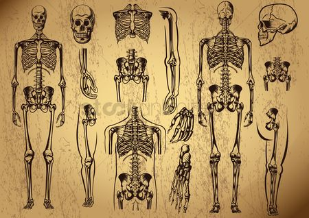 Sets : Human skeleton