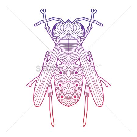 Biology : Intricate house fly design