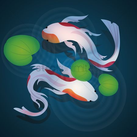 Marine life : Koi fishes swimming