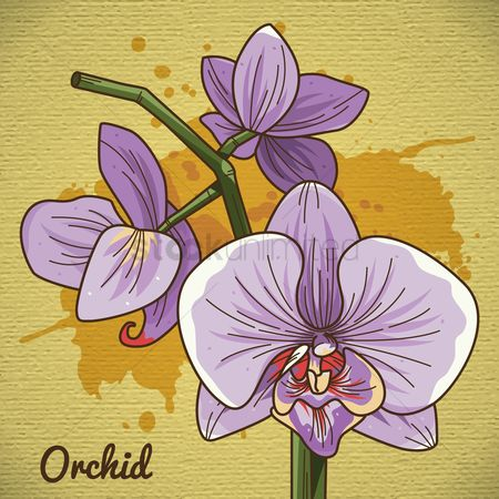 Fragrance : Orchid flower