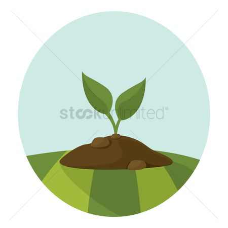 Agriculture : Plant growing in soil